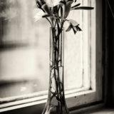 O_letných_kvetinách