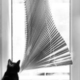 Keď_zostanú_mačky_doma_samé